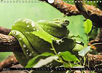 Tierische Momentaufnahmen (Wandkalender 2019 DIN A4 quer) - Produktdetailbild 4