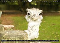 Tierische Momentaufnahmen (Wandkalender 2019 DIN A4 quer) - Produktdetailbild 1