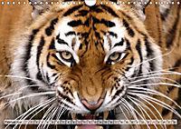 Tierische Momentaufnahmen (Wandkalender 2019 DIN A4 quer) - Produktdetailbild 2