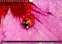 Tierische Momentaufnahmen (Wandkalender 2019 DIN A4 quer) - Produktdetailbild 8