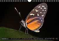 Tierische Momentaufnahmen (Wandkalender 2019 DIN A4 quer) - Produktdetailbild 9