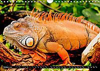 Tierische Momentaufnahmen (Wandkalender 2019 DIN A4 quer) - Produktdetailbild 10