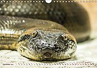 Tierische Momentaufnahmen (Wandkalender 2019 DIN A4 quer) - Produktdetailbild 12