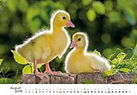 Tierkinder auf dem Bauernhof 2019 - Produktdetailbild 8