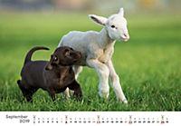 Tierkinder auf dem Bauernhof 2019 - Produktdetailbild 9