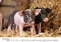 Tierkinder auf dem Bauernhof 2019 - Produktdetailbild 12