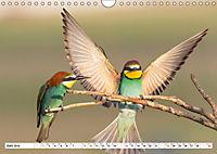 Tiermomente (Wandkalender 2019 DIN A4 quer) - Produktdetailbild 6