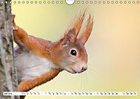 Tiermomente (Wandkalender 2019 DIN A4 quer) - Produktdetailbild 7