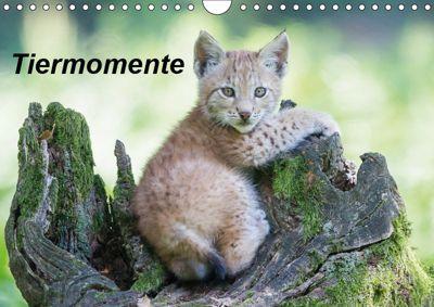 Tiermomente (Wandkalender 2019 DIN A4 quer), Wilfried Martin