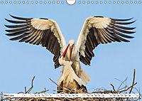 Tiermomente (Wandkalender 2019 DIN A4 quer) - Produktdetailbild 3