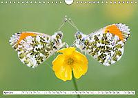 Tiermomente (Wandkalender 2019 DIN A4 quer) - Produktdetailbild 4
