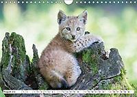 Tiermomente (Wandkalender 2019 DIN A4 quer) - Produktdetailbild 8