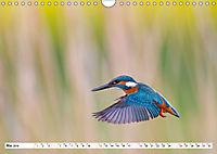 Tiermomente (Wandkalender 2019 DIN A4 quer) - Produktdetailbild 5