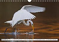Tiermomente (Wandkalender 2019 DIN A4 quer) - Produktdetailbild 11