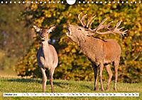 Tiermomente (Wandkalender 2019 DIN A4 quer) - Produktdetailbild 10