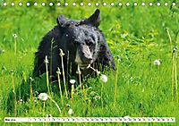 Tierwelt in den Canadian Rockies (Tischkalender 2019 DIN A5 quer) - Produktdetailbild 5