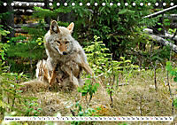 Tierwelt in den Canadian Rockies (Tischkalender 2019 DIN A5 quer) - Produktdetailbild 1
