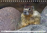 Tierwelt in den Canadian Rockies (Tischkalender 2019 DIN A5 quer) - Produktdetailbild 2