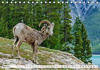 Tierwelt in den Canadian Rockies (Tischkalender 2019 DIN A5 quer) - Produktdetailbild 3