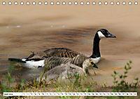 Tierwelt in den Canadian Rockies (Tischkalender 2019 DIN A5 quer) - Produktdetailbild 6