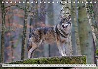 Tierwelt in den Canadian Rockies (Tischkalender 2019 DIN A5 quer) - Produktdetailbild 10