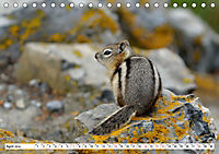 Tierwelt in den Canadian Rockies (Tischkalender 2019 DIN A5 quer) - Produktdetailbild 4