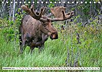 Tierwelt in den Canadian Rockies (Tischkalender 2019 DIN A5 quer) - Produktdetailbild 9