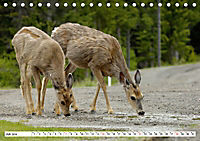 Tierwelt in den Canadian Rockies (Tischkalender 2019 DIN A5 quer) - Produktdetailbild 7
