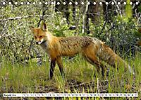 Tierwelt in den Canadian Rockies (Tischkalender 2019 DIN A5 quer) - Produktdetailbild 8