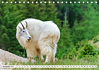 Tierwelt in den Canadian Rockies (Tischkalender 2019 DIN A5 quer) - Produktdetailbild 11