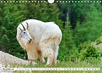 Tierwelt in den Canadian Rockies (Wandkalender 2019 DIN A4 quer) - Produktdetailbild 11
