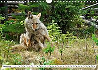 Tierwelt in den Canadian Rockies (Wandkalender 2019 DIN A4 quer) - Produktdetailbild 1