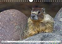 Tierwelt in den Canadian Rockies (Wandkalender 2019 DIN A4 quer) - Produktdetailbild 2