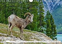 Tierwelt in den Canadian Rockies (Wandkalender 2019 DIN A4 quer) - Produktdetailbild 3