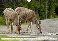Tierwelt in den Canadian Rockies (Wandkalender 2019 DIN A4 quer) - Produktdetailbild 7