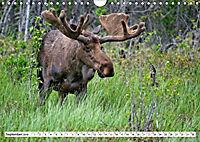Tierwelt in den Canadian Rockies (Wandkalender 2019 DIN A4 quer) - Produktdetailbild 9