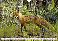 Tierwelt in den Canadian Rockies (Wandkalender 2019 DIN A4 quer) - Produktdetailbild 8