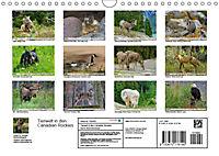 Tierwelt in den Canadian Rockies (Wandkalender 2019 DIN A4 quer) - Produktdetailbild 13