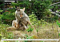 Tierwelt in den Canadian Rockies (Wandkalender 2019 DIN A2 quer) - Produktdetailbild 1