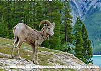 Tierwelt in den Canadian Rockies (Wandkalender 2019 DIN A2 quer) - Produktdetailbild 3