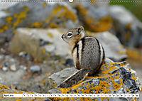 Tierwelt in den Canadian Rockies (Wandkalender 2019 DIN A2 quer) - Produktdetailbild 4