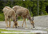 Tierwelt in den Canadian Rockies (Wandkalender 2019 DIN A2 quer) - Produktdetailbild 7