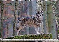 Tierwelt in den Canadian Rockies (Wandkalender 2019 DIN A2 quer) - Produktdetailbild 10