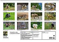 Tierwelt in den Canadian Rockies (Wandkalender 2019 DIN A2 quer) - Produktdetailbild 13