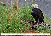 Tierwelt in den Canadian Rockies (Wandkalender 2019 DIN A2 quer) - Produktdetailbild 12