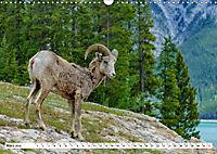 Tierwelt in den Canadian Rockies (Wandkalender 2019 DIN A3 quer) - Produktdetailbild 3