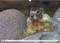 Tierwelt in den Canadian Rockies (Wandkalender 2019 DIN A3 quer) - Produktdetailbild 2