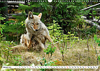 Tierwelt in den Canadian Rockies (Wandkalender 2019 DIN A3 quer) - Produktdetailbild 1