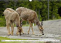 Tierwelt in den Canadian Rockies (Wandkalender 2019 DIN A3 quer) - Produktdetailbild 7
