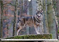 Tierwelt in den Canadian Rockies (Wandkalender 2019 DIN A3 quer) - Produktdetailbild 10